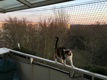 Cat Net by the m² (Made to Measure) | Safetynet365