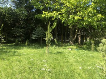 Geflügelzaun 20 m mit Stehern, schwarz | Schutznetze24
