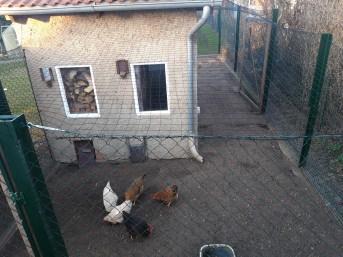 Geflügelnetz per m² (nach Maß), schwarz | Schutznetze24